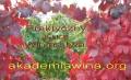 akademia wina
