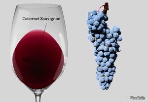 cabernet-sauvignon-uva