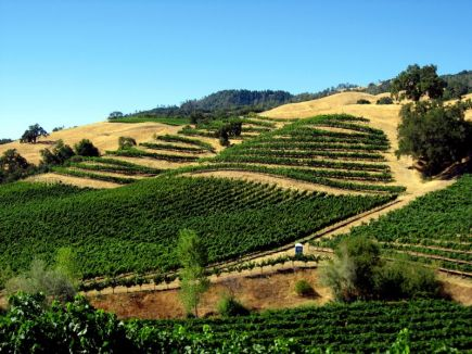 vineyards_in_alexander_valley